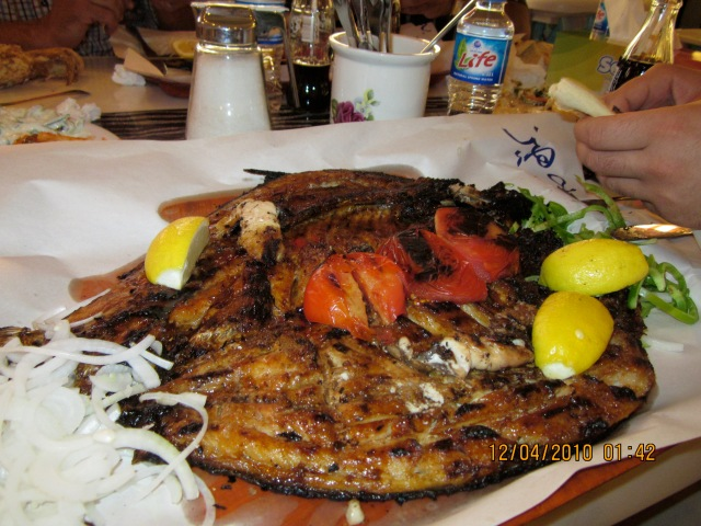 """My shot of the fish """"before"""""""